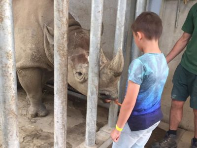 Endangered Black Rhinoceros • Fun Facts and Information For Kids